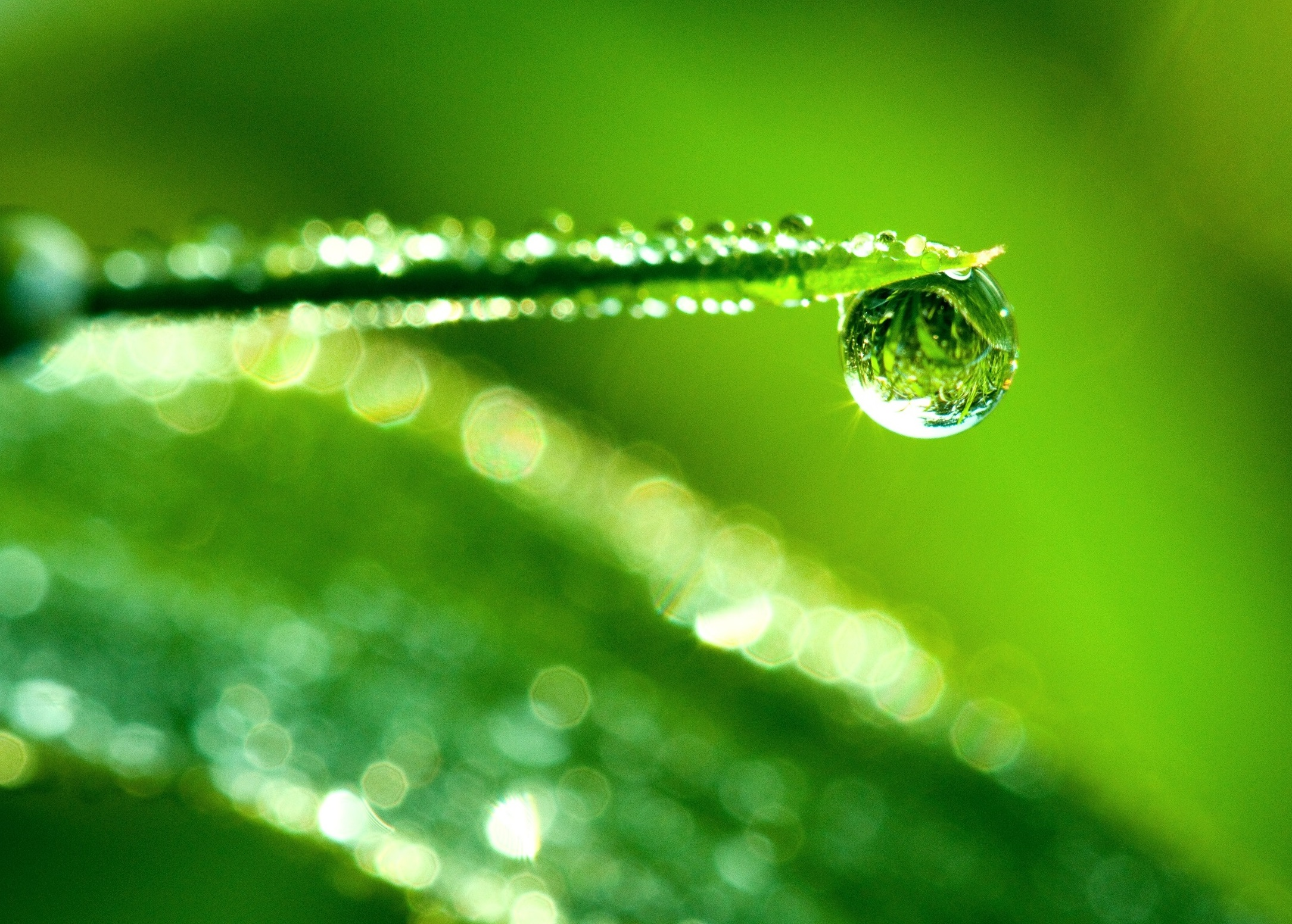 water_drop_reflection_macro-wallpaper